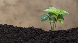 agricultura- agricultor-plantas