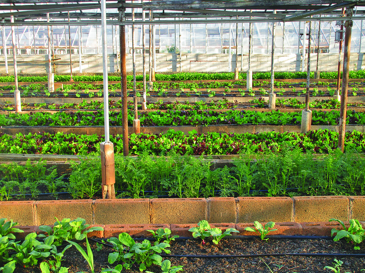 Support for the Andalusian agricultural sector